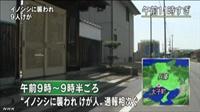 イノシシに襲われ9人けが 襲ったイノシシは車にひかれて力尽きる=兵庫
