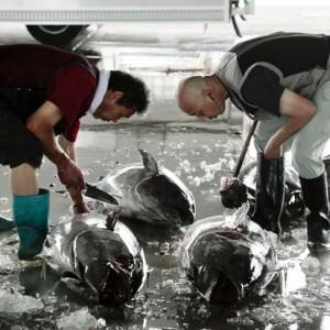 【セシウム】福島沖の魚介類、依然として放射性レベル下がらず