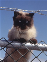 よく訓練された猫が刑務所にドラッグを宅配 黒猫かどうかは不明