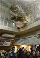 【ヒポポタマス】旭山動物園で「空飛ぶカバ」人気