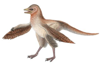 前脚だけに翼を持つ新種の羽毛恐竜の化石を発見、陸上を走るのに適応か