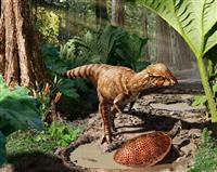 「石頭恐竜」の新種か 分厚いドーム形の頭蓋骨発見/カナダ