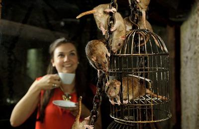 【国際】英国で「ネズミカフェ」がオープン 日本の「ネコカフェ」から着想