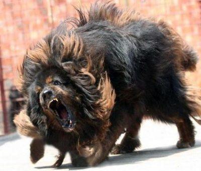 最強の犬wwwwwwwwww