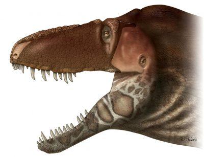 【朗報】ティラノサウルス科、やはり鱗に覆われていた