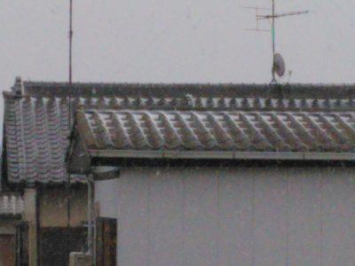 静岡県民やが雪降ってきて草
