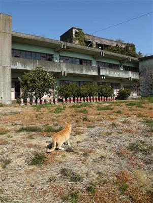 【話題】まさに猫島!人間15人に猫が100匹 愛媛