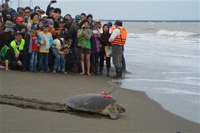 【動物】アオウミガメ50歳の「レディ・ガガ」が台湾の小中学生から「がんばって」「元気でね」と見送られ、海に帰る。