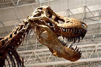 ティラノサウルスは本当は走れなかったってマジ?