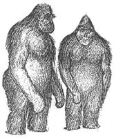 ヒマラヤの雪男の謎、ついに解明? 古代のホッキョクグマとDNA一致