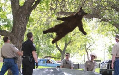 【社会】落下してきたクマともみ合い65歳男性が怪我…宮城