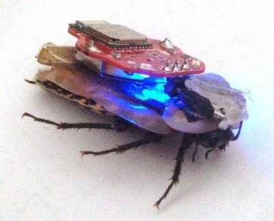 【アメリカ】米軍がサイボーグゴキブリを開発中