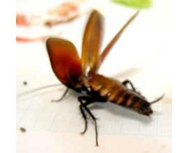 小学生ワイ「ゴキブリ怖いとかwwww女子ンゴwwww臆病者ンゴwwwww」