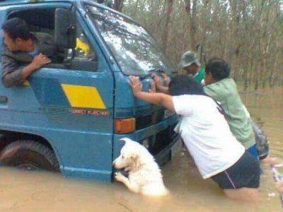 イッヌ「どうしたんや?」人間「車が水没してしまって・・・」